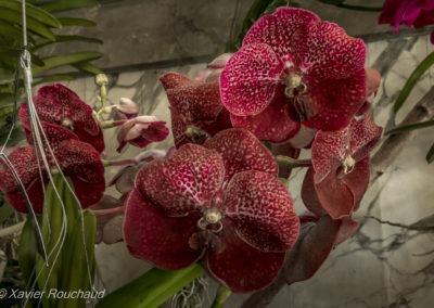 Floralia_2016--5048