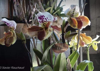 Floralia_2016--5051