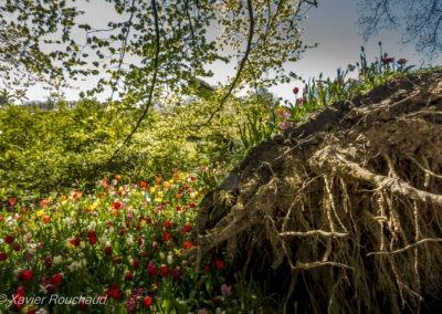 Floralia_2016--5092