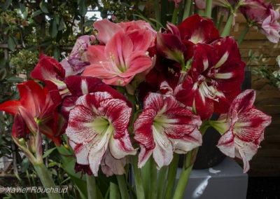 Floralia_2016--5109
